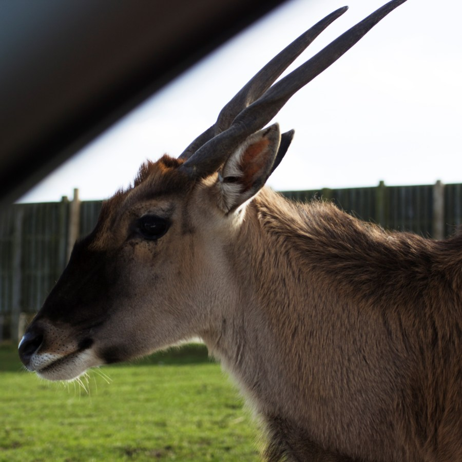 Deer at Safari Park