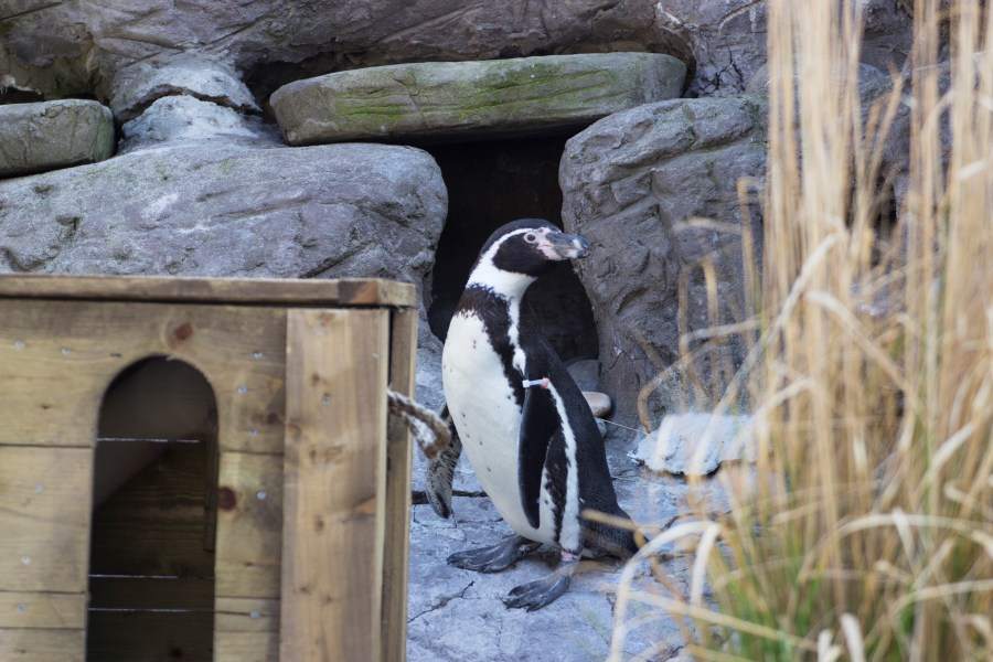 Penguin 2 Safari Park