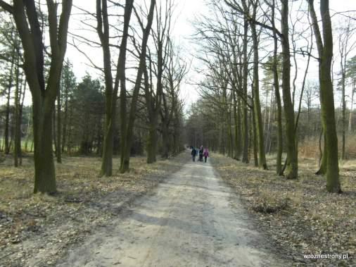 Ścieżka przez las od strony Starczanowa