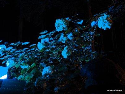Arboretum nocą
