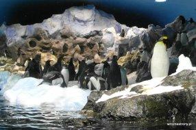 Pingwiny w Loro Parque