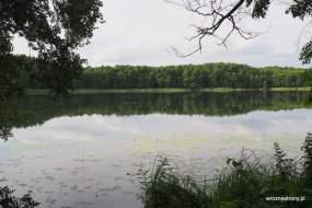 Jezioro Dankowskie (Wielgie)