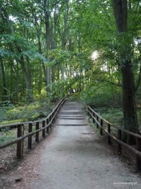 Droga na wzgórze Gosań