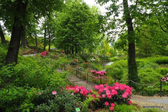 Arboretum w Wojslawicach, Dolny Śląsk