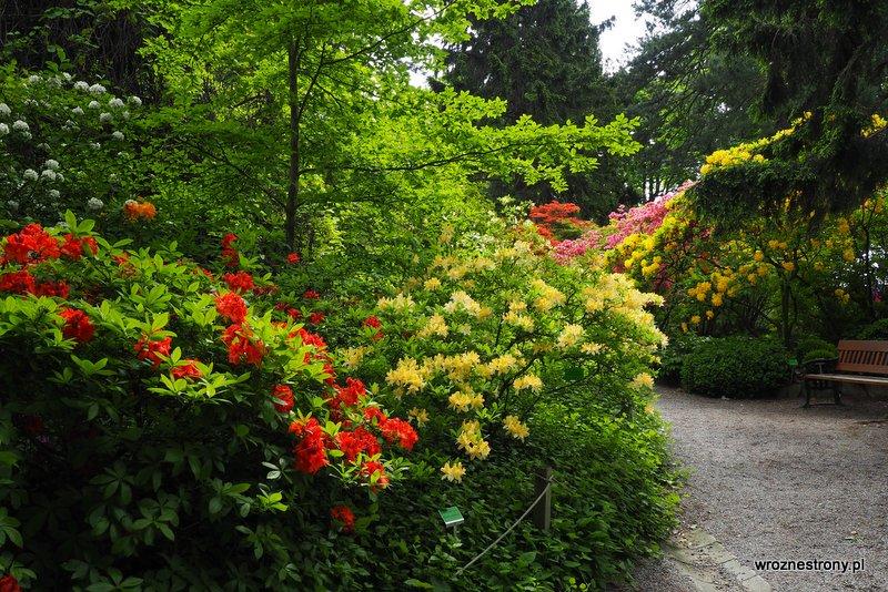 Arboretum w Wojslawicach