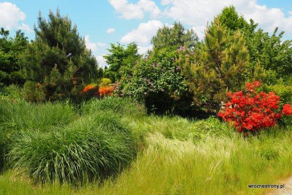 Arboretum Leśne w Sycowie