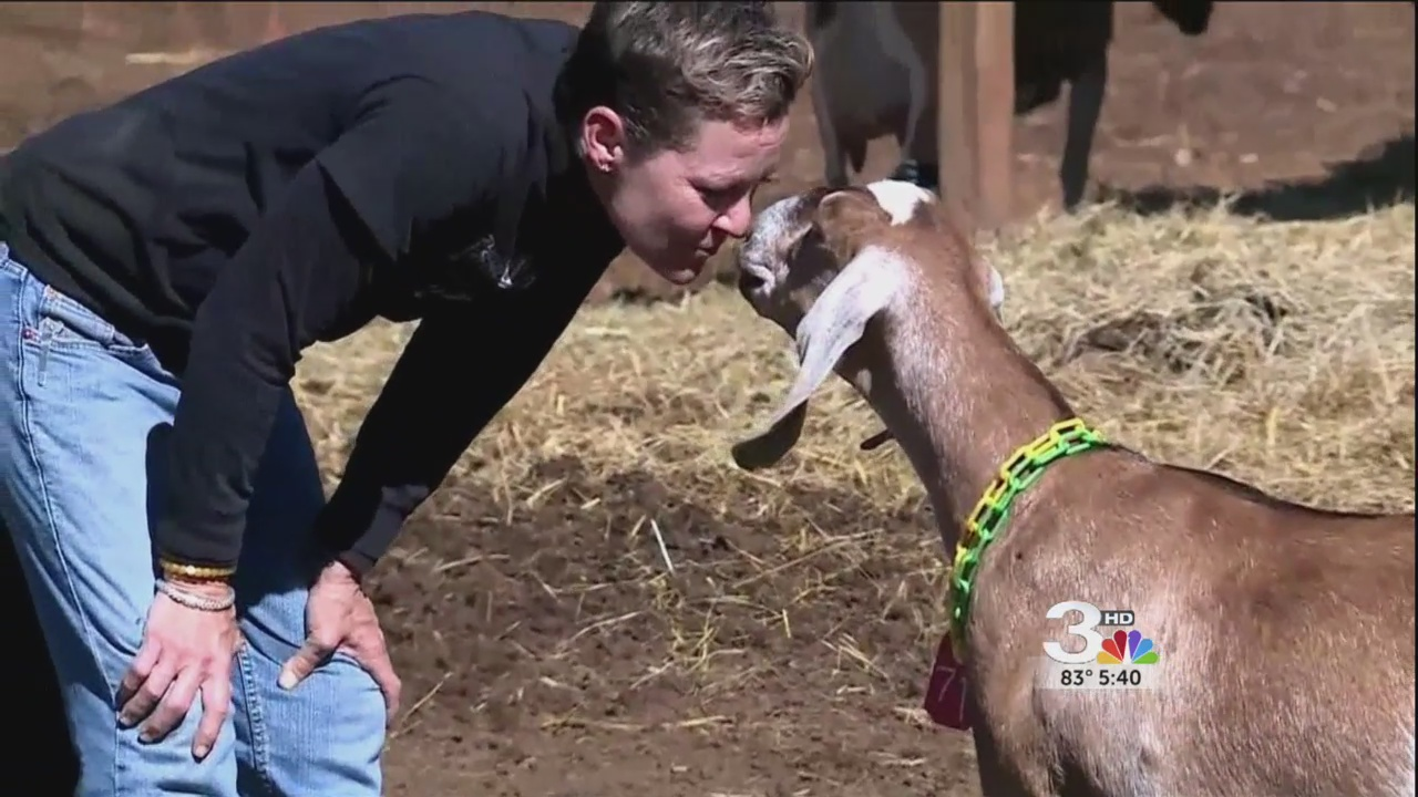 goat therapy_324440