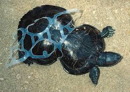 Turtle stuck in plastic