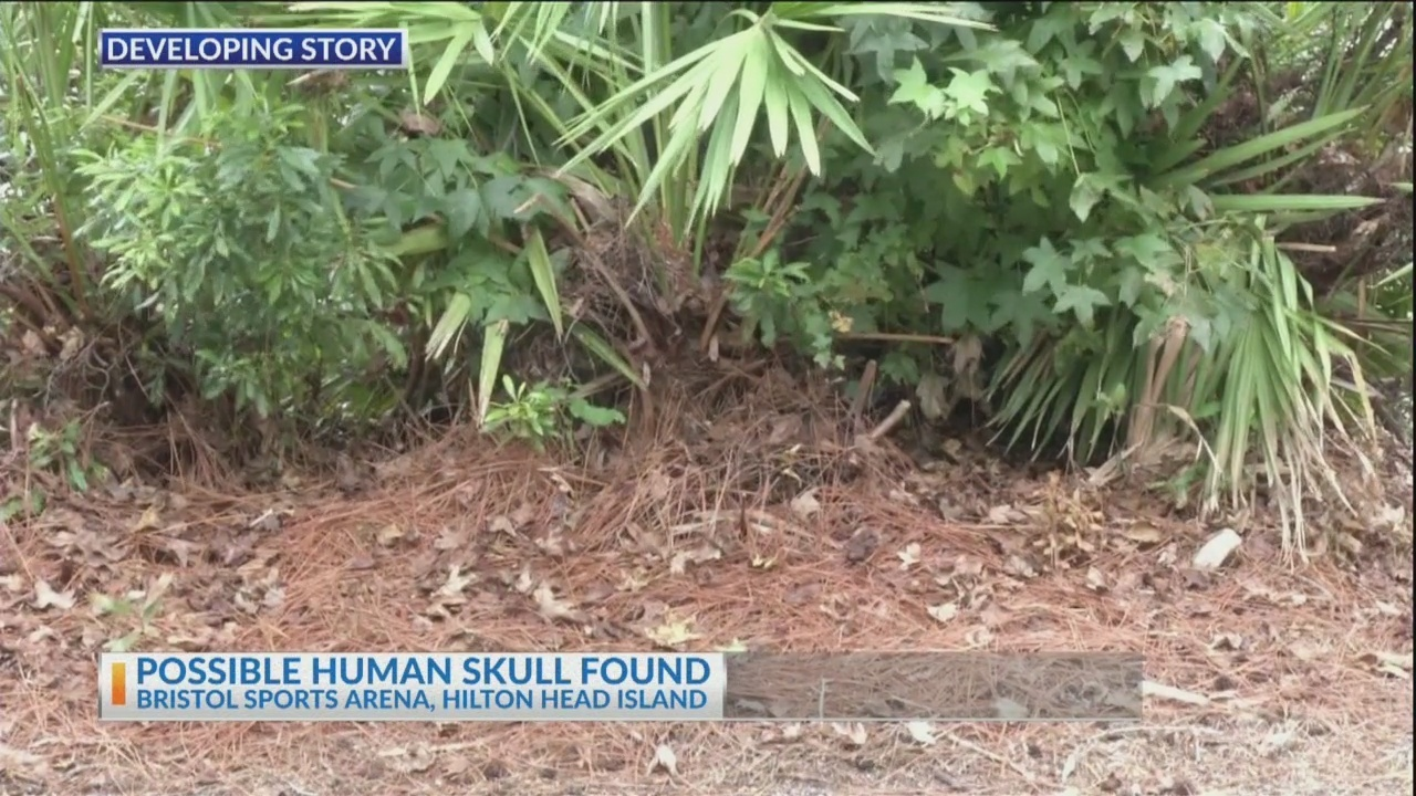 Possible human skull found