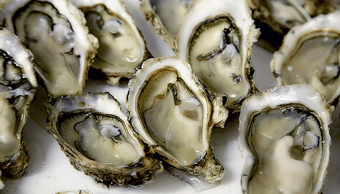 oysters_1539890061445.png
