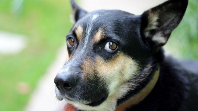 dog generic guilty_160437