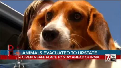 animal evacuations_451496