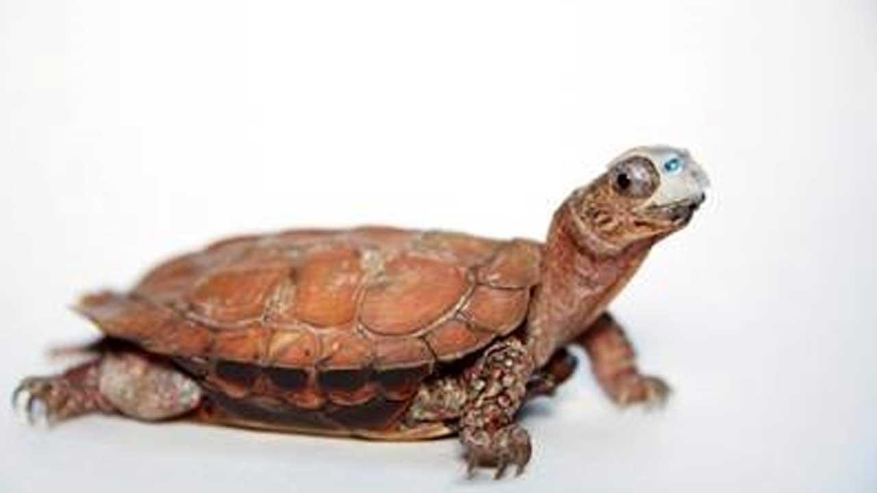 turtle-mask_474198