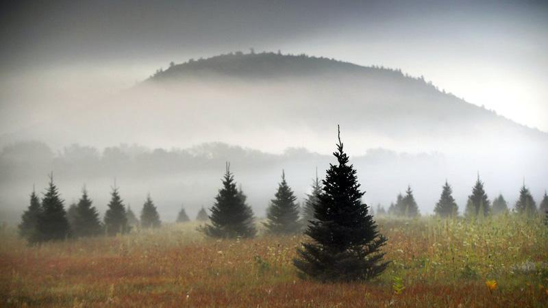 Christmas-tree_1536691491078.jpg