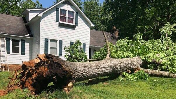 Blacksburg-fallen-tree--WEB_1556312367433.png
