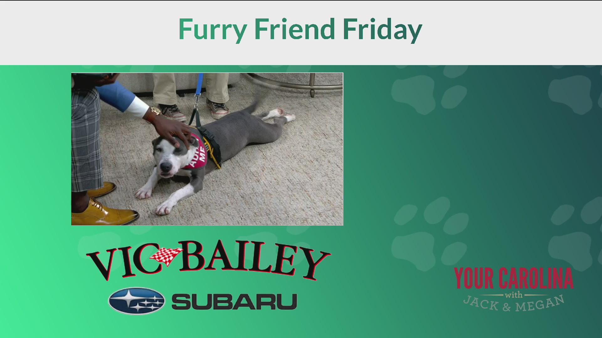 Furry Friend Friday - Meet Zuri