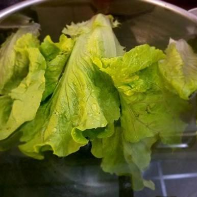 lettuce bugs
