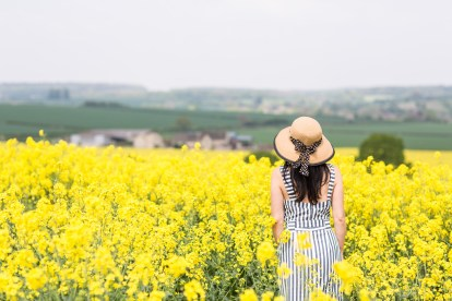Yellow fields, England