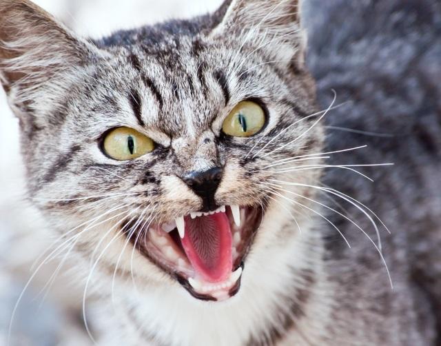 cat_125555