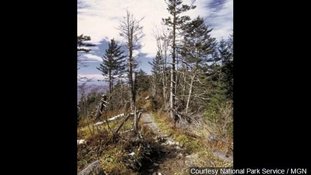 Appalachian Trail_288304
