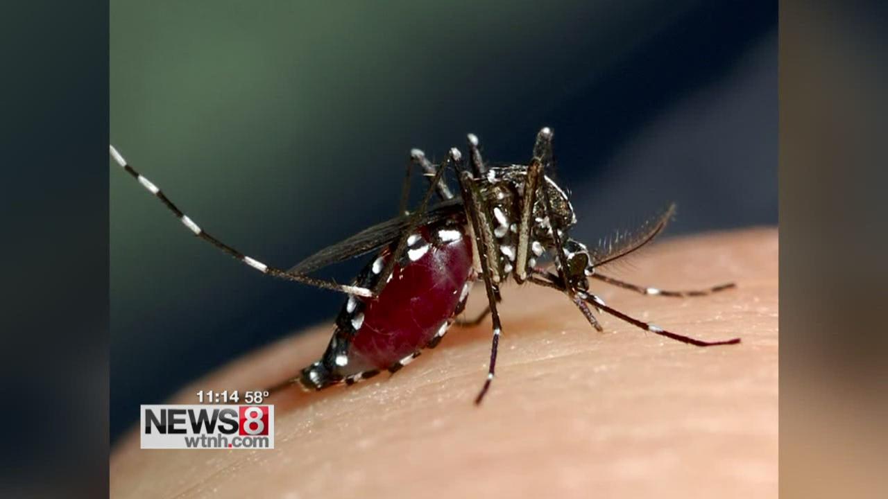 mosquito_281274