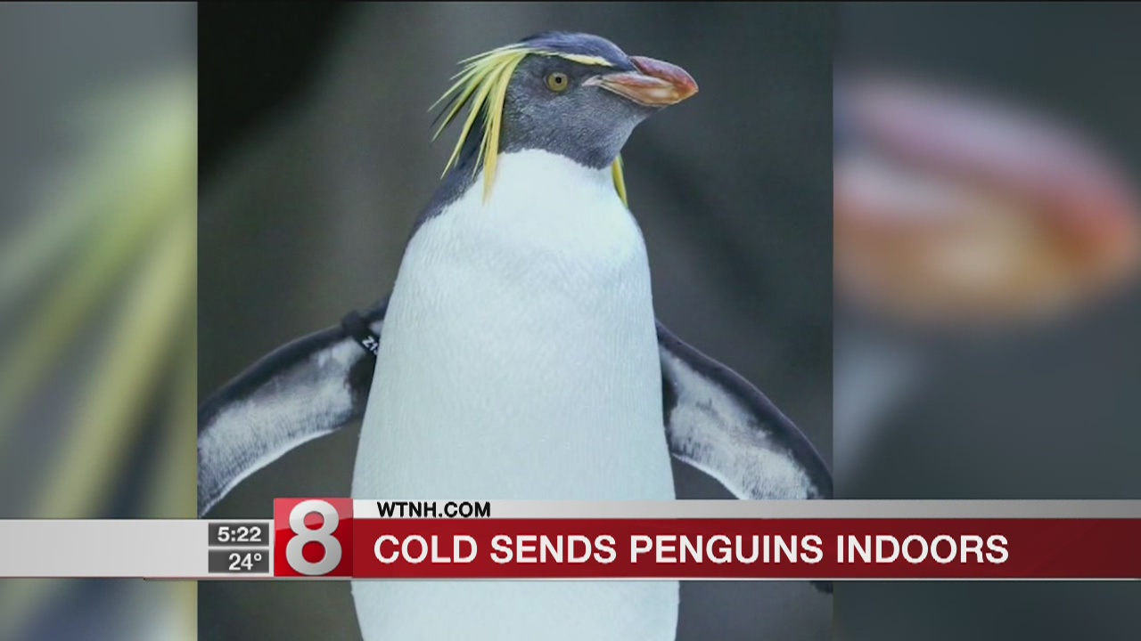 Penguin cold_592422
