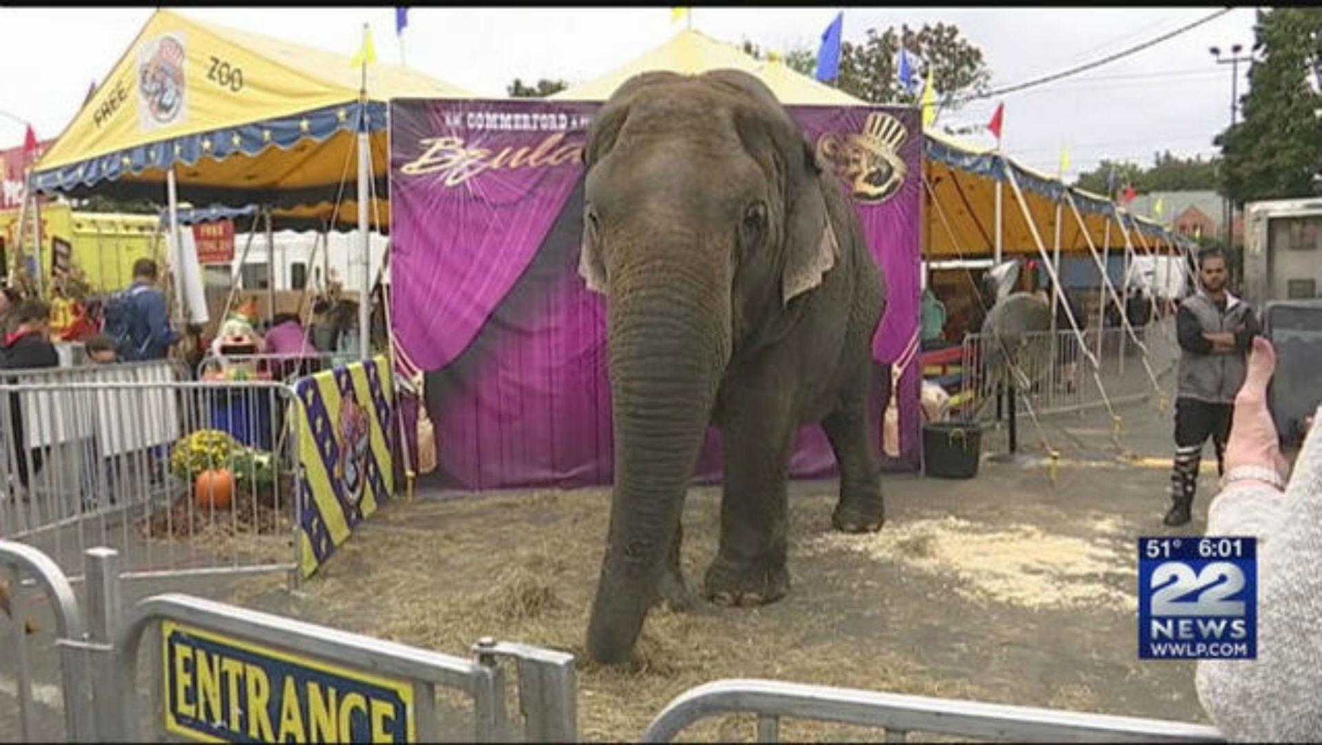 elephant at Big E_1537878594793.jpg.jpg