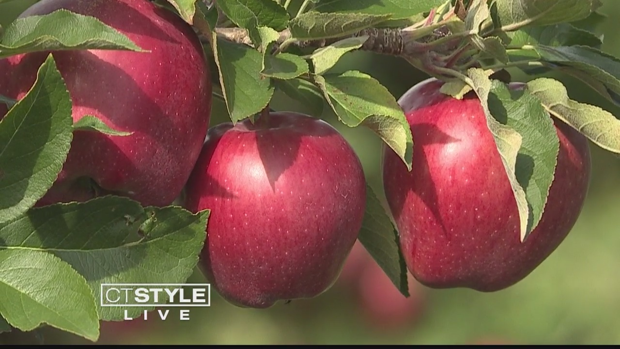 Take Advantage of the Fall at Lyman Orchards in Middlefield
