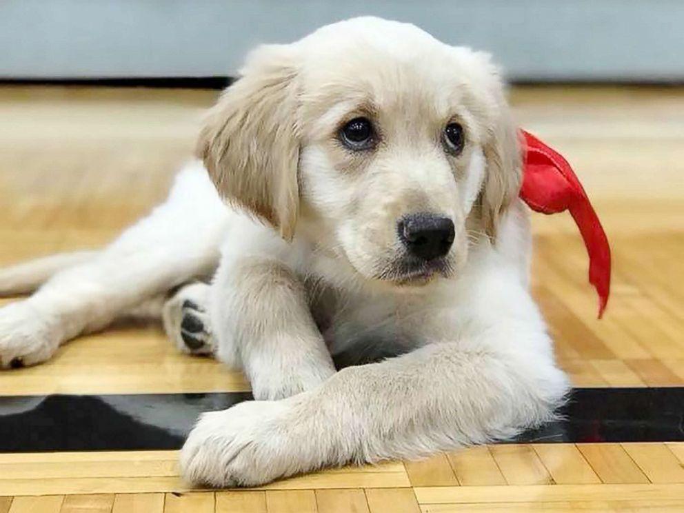 puppy_578005