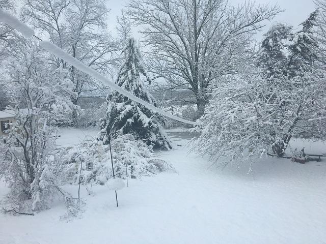 snowgriswold_641255