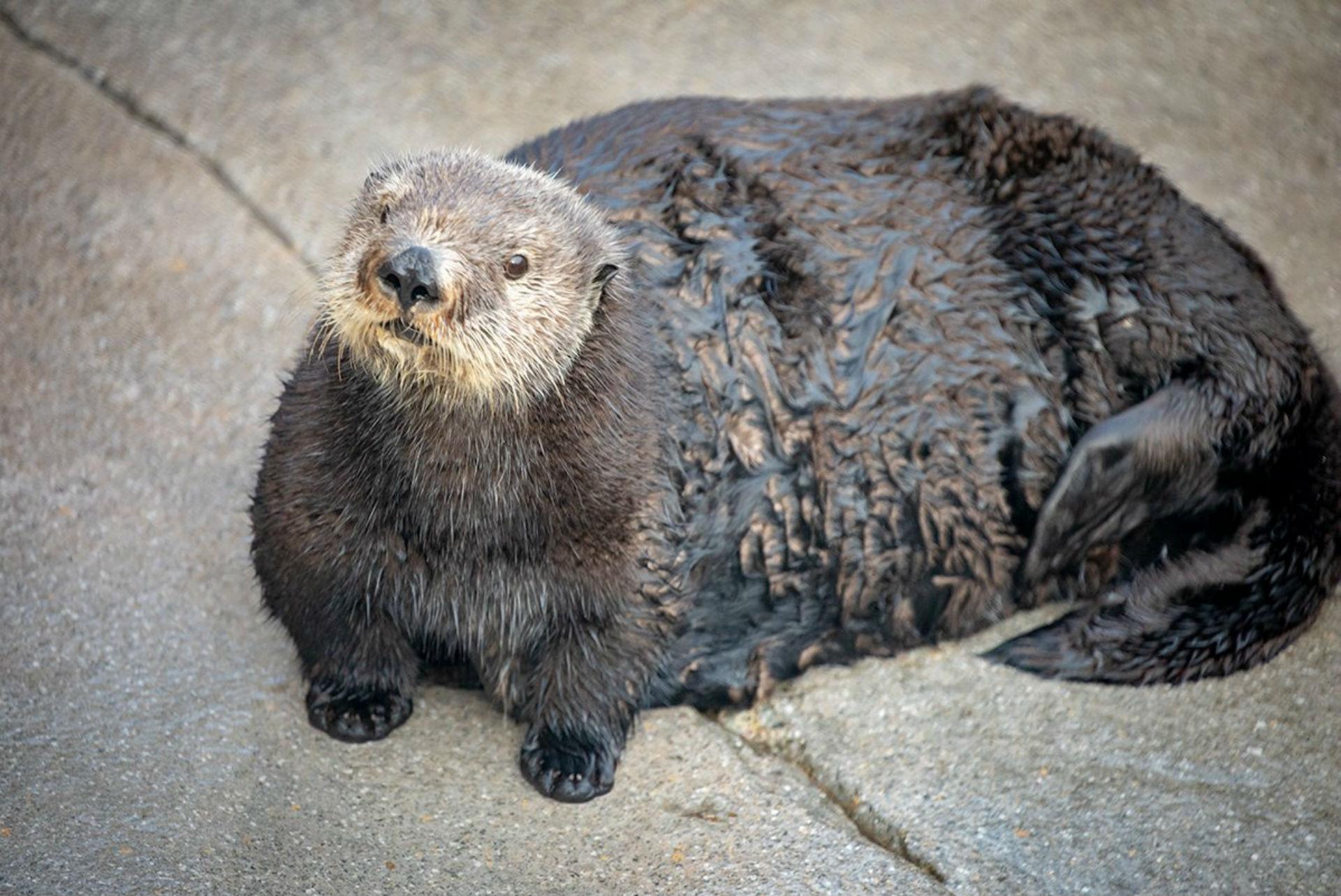 Abby the otter_1545400228969.jpg.jpg