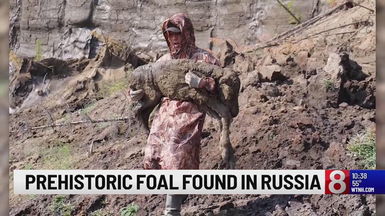 Prehistoric foal found in Russia