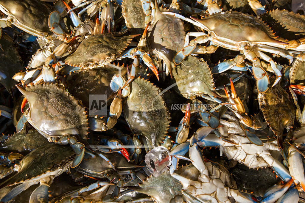 Chesapeake-Blue Crabs_1557232224241