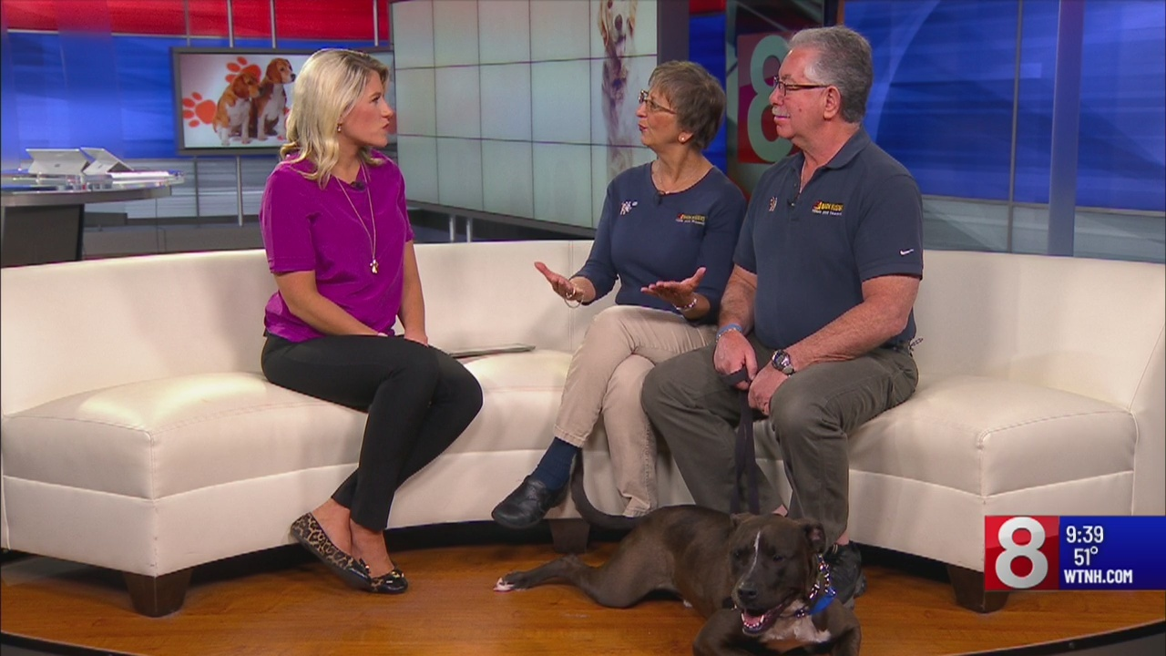 Dealing with bad dog behaviors
