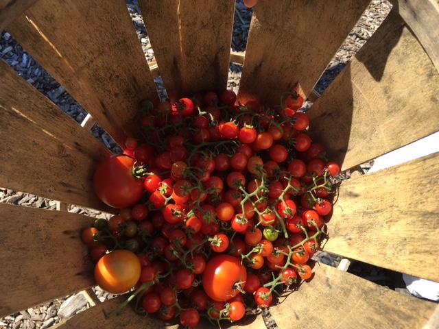 tomatoes_343428