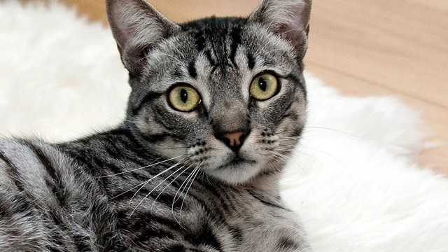 cat_1521644294432.jpg