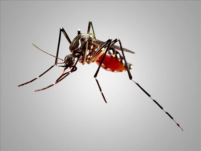 mosquito_1539026781357.jpg