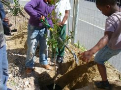 ARBOR DAY IN WESTLAKE - 7 SEPTEMBER '12 031