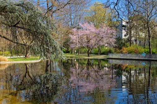 Frühling 2020 im Ringpark in Würzburg.
