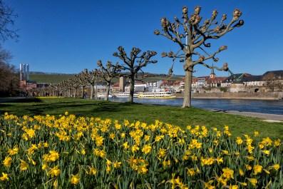 Frühlingsanfang an der Leonhard-Frank-Promenade in Würzburg.