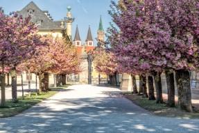 Früh am Morgen hat man den Hofgarten der Residenz noch fast für sich alleine.