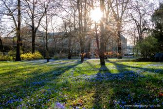 Frühlingsblüher im Ringpark am Rennweg.