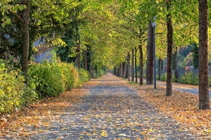 Herbstspaziergang entlang der Mergentheimer-Straße in Würzburg.