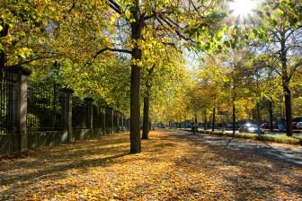 Herbst an der Balthasar-Neumann-Promenade