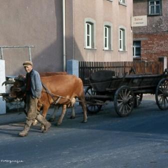Ein Landwirt mit Kuh und Karren im Zinklesweg im heutigen Stadtteil Lindleinsmühle 1967. Im Hintergrund das Schild der Bäckerei Weberbauer.