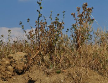 Trockenstress: BN mahnt zu sorgsamen Umgang mit Wasser