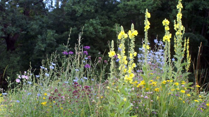 Stadt stellt Saatgut für 10.000 Quadratmeter Blühfläche zur Verfügung