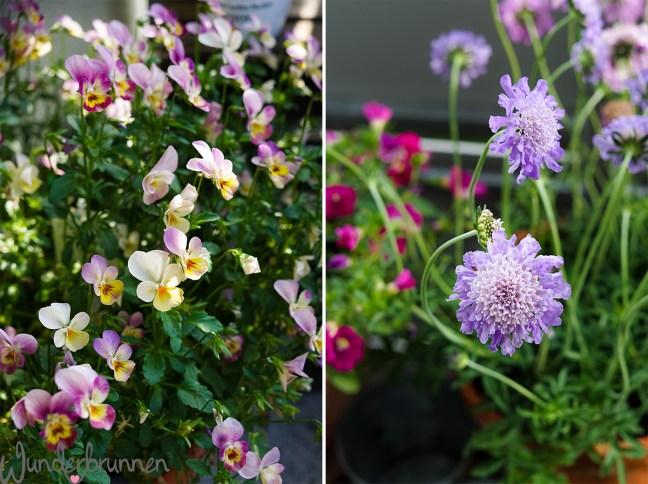 Hallo Juni - Wunderbrunnen - Foodblog - Fotografie