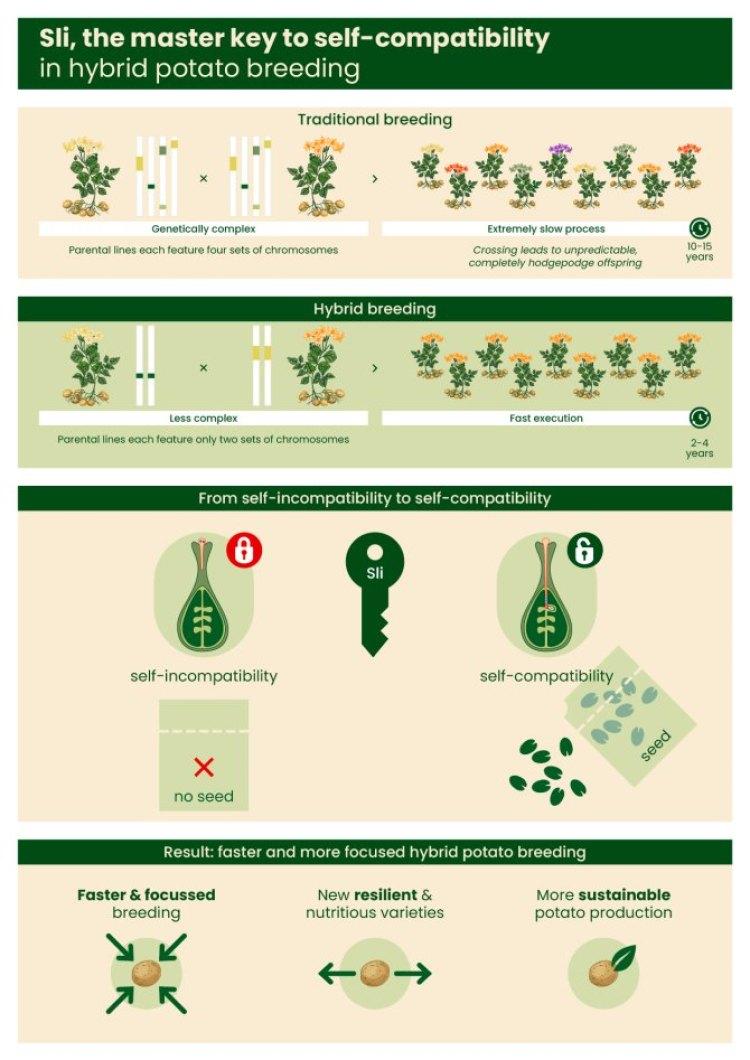 Infographic Sli-gene_UK_screen.jpg