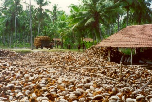 Ecocoboard A New Material Made From Coconut Husks WUR